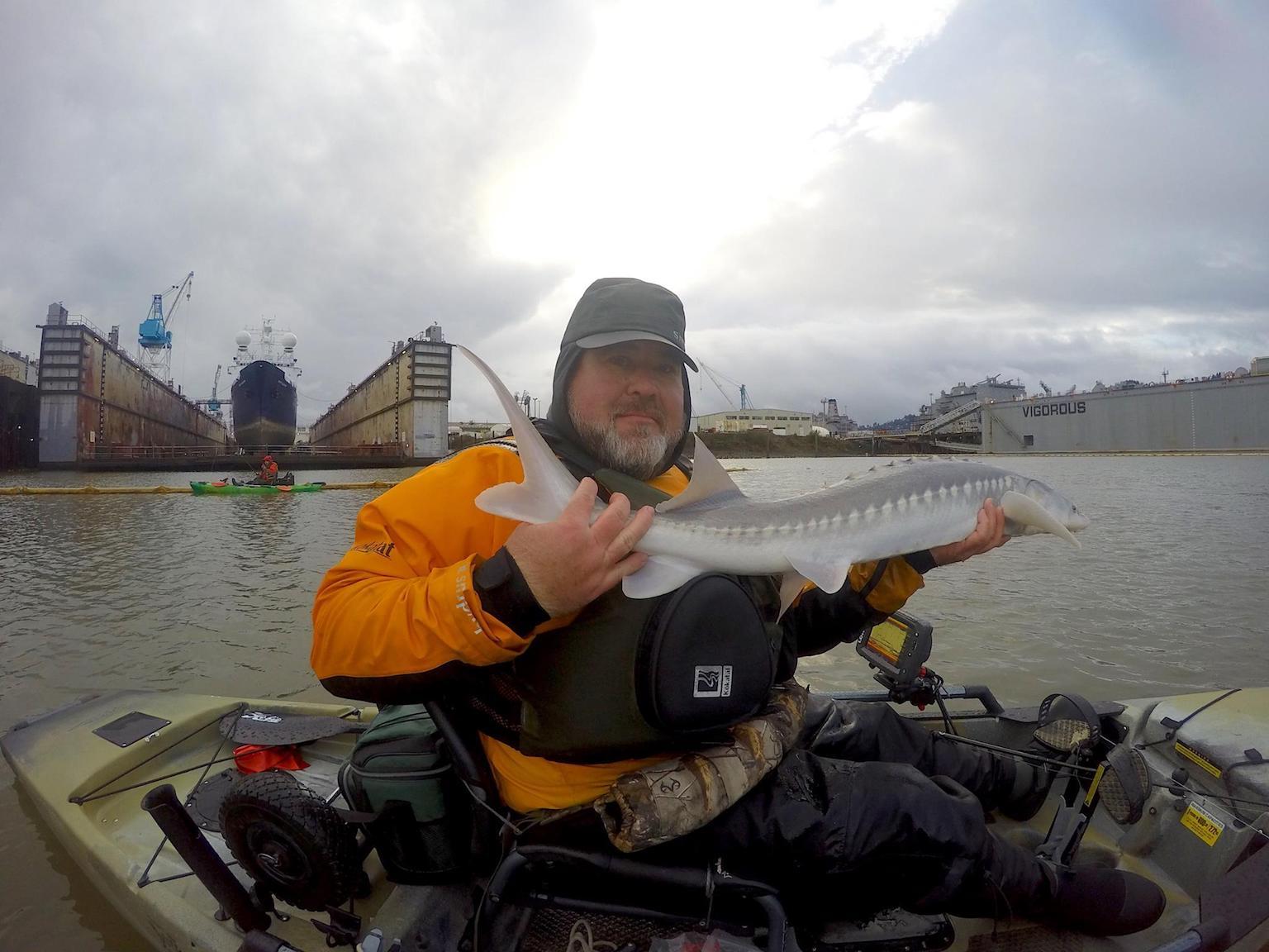 Sturgeon fishing on the willamette kayak fishing washington for Sturgeon fishing washington